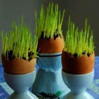 ایده جدید برای کاشت سبزه عید در پوست تخم مرغ