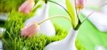 مدل های جدید و زیبای تزیین سبزه عید نوروز ۹۶