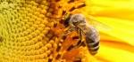 خاصیت انواع عسل + عکس