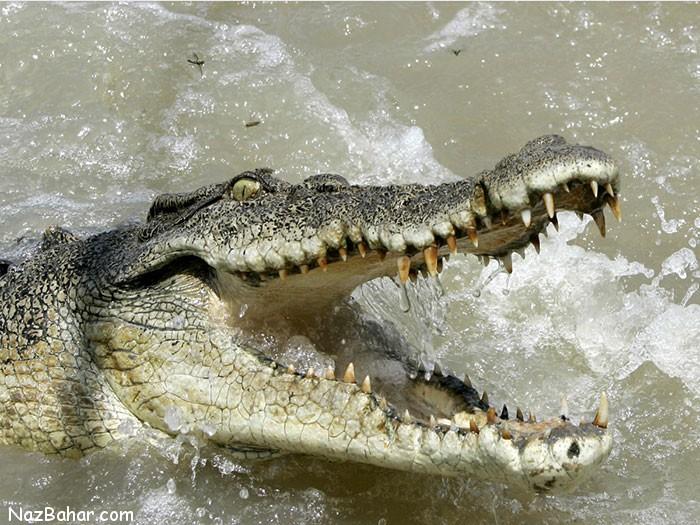 با مرگبارترین جانداران کره خاکی آشنا شوید
