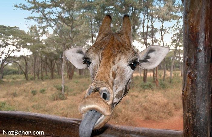 عکس هایی جالب و دیدنی از لحظات خنده دار حیوانات