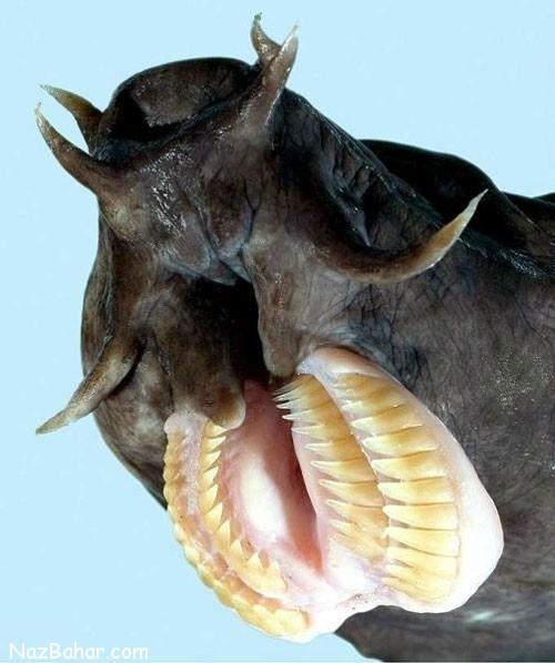 آشنایی با جانورانی که ترسناک ترین دهان ها را دارند