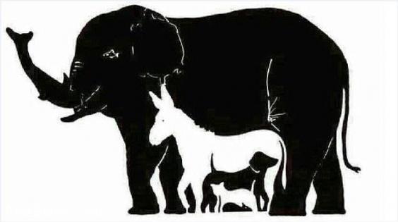 معمای تصویری : چند حیوان در این تصویر میبینید