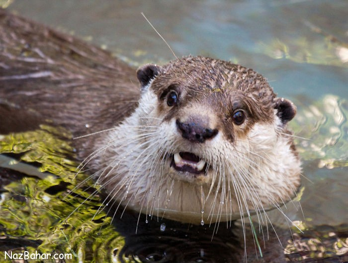 عکس های دیدنی و بامزه از تعجب حیوانات