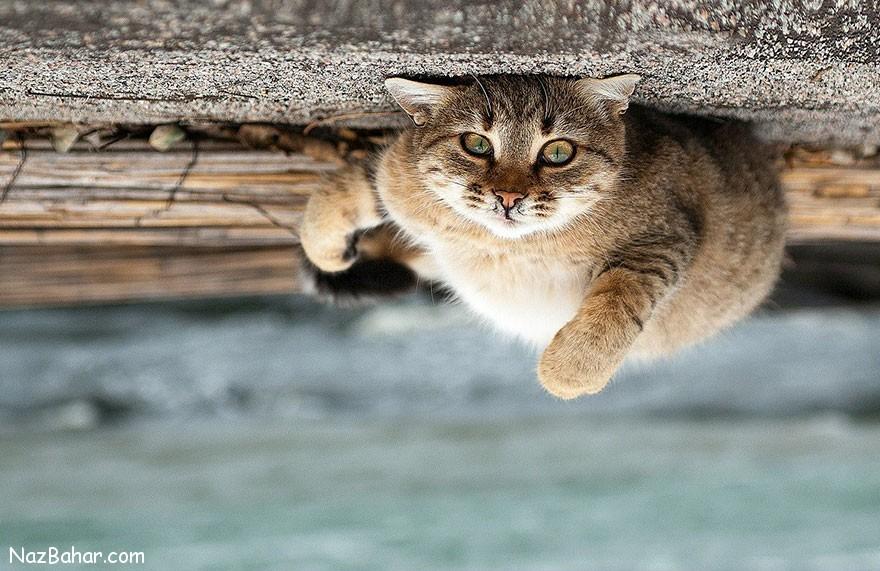 پرتره های زیبا و بینظیر حیوانات که توسط عکاس اوکراینی ثبت شده اند