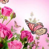 متن و جملات انگلیسی ترجمه فارسی